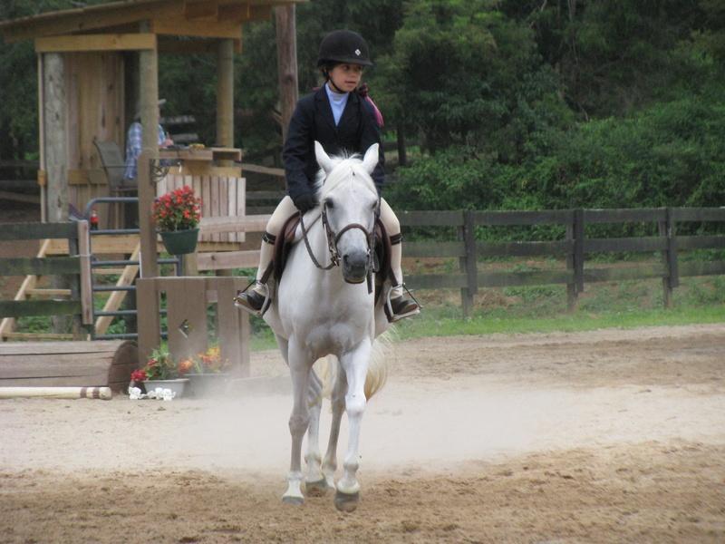 Short stirrup gray pony